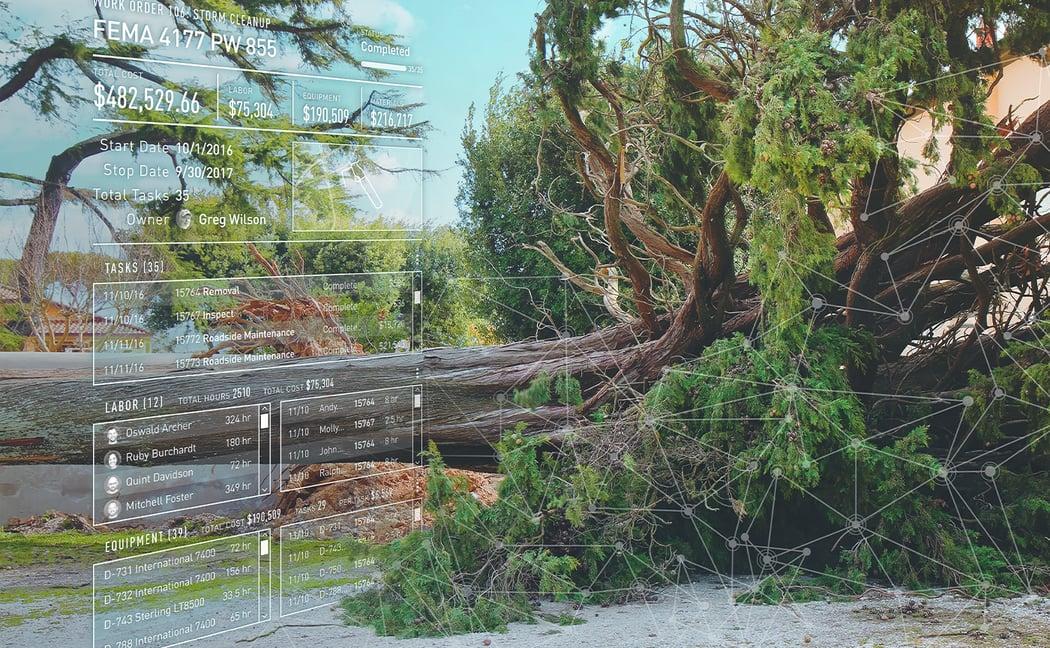 FEMA work order UI next to a downed tree