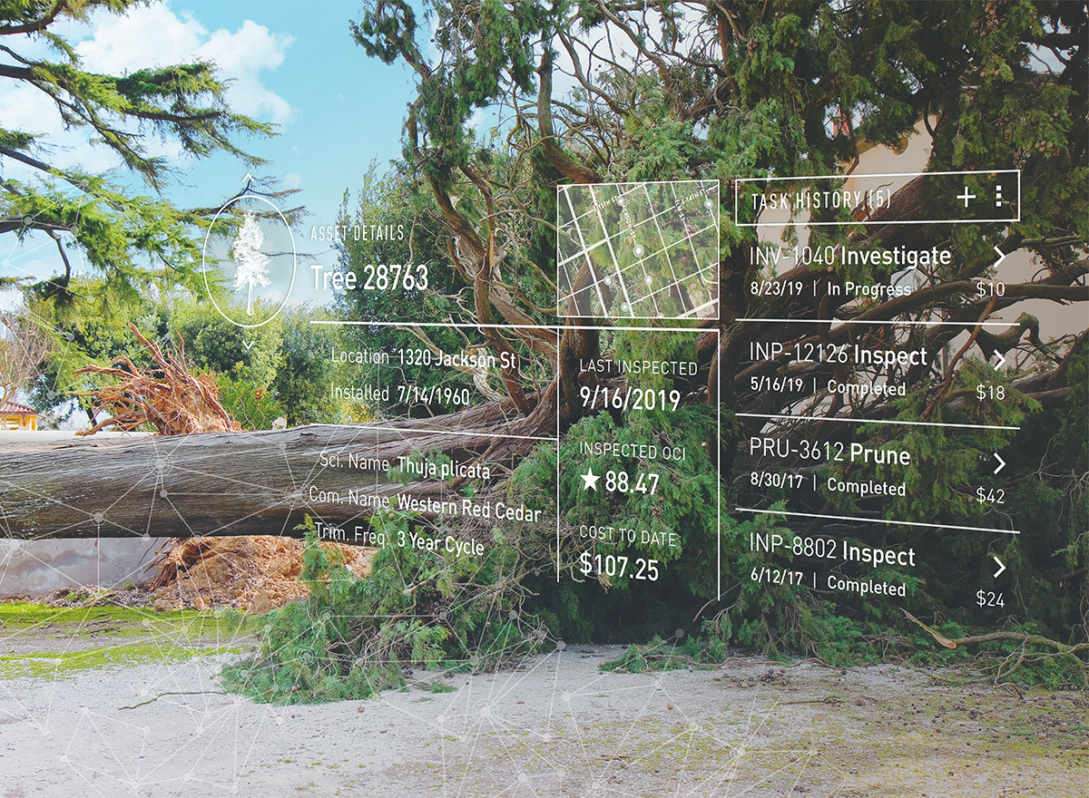 Downed tree with Cartegraph inspection history