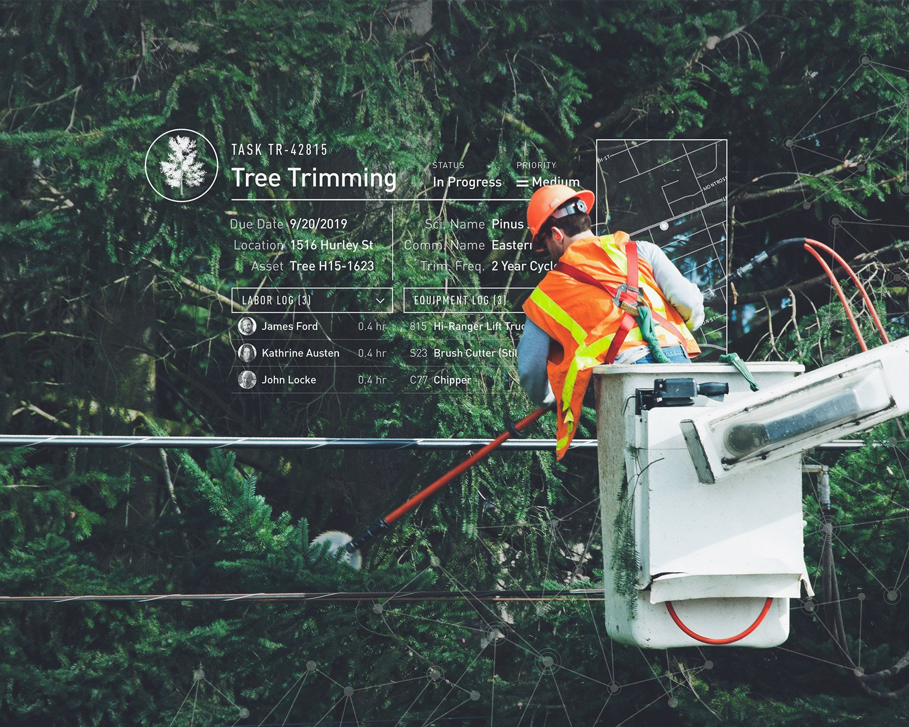 Tree care: forestry worker pruning a pine tree with a tree trimmer